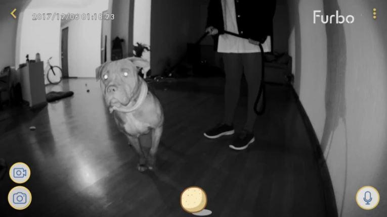 Парень установил дома интерактивную камеру... И очень скоро она помогла ему выручить пса из беды!