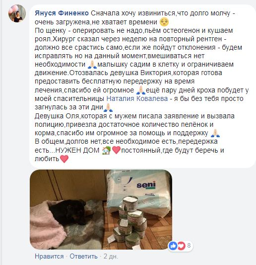 «Её выбросили с 4 этажа!» История печальноглазого щенка из Кривого Рога набирает обороты в сети...