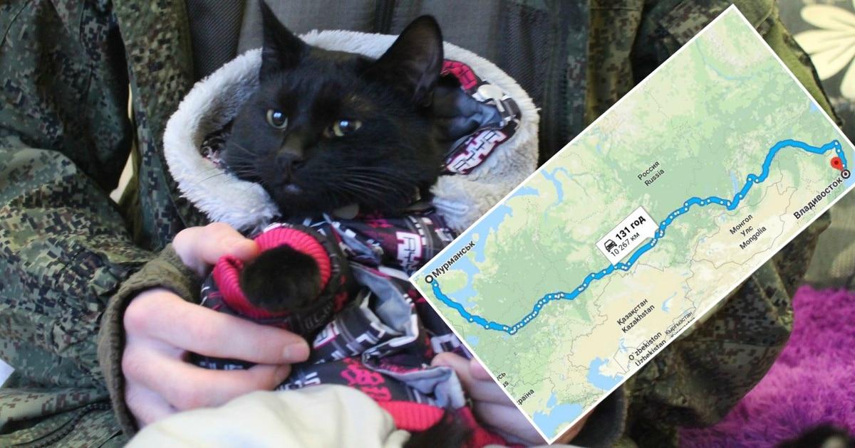 А кто ещё так может? Кот преодолел 10 тысяч километров автостопом от Мурманска до Владивостока!