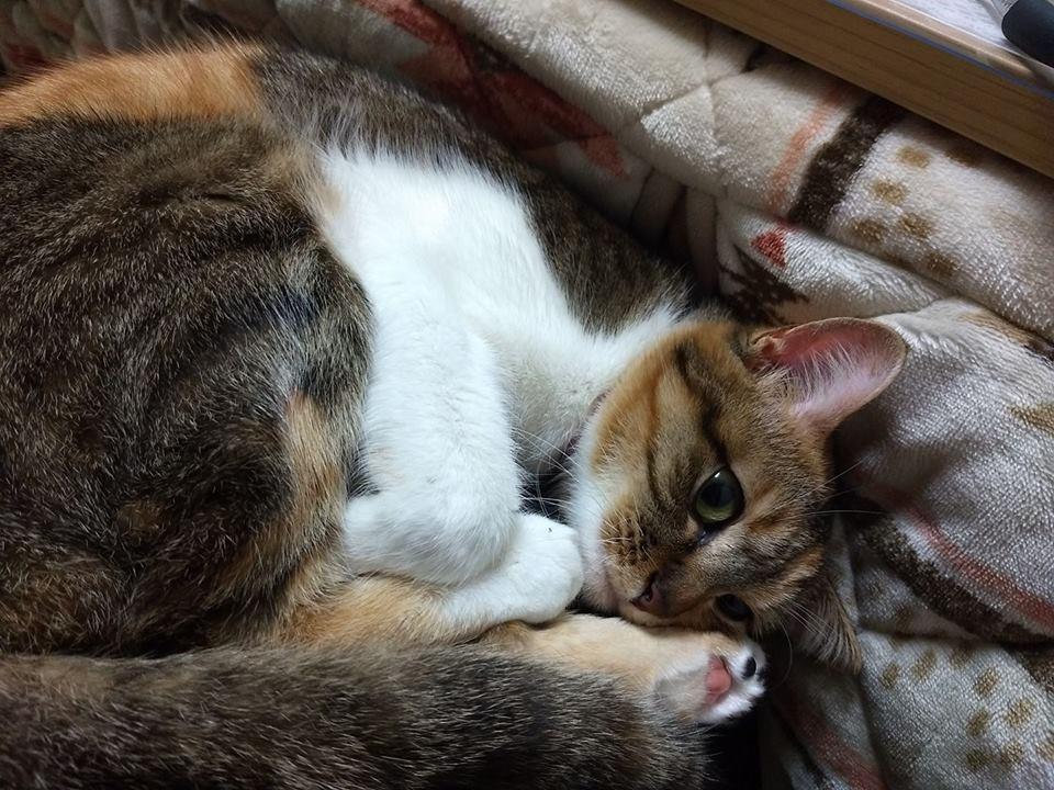 Муся: чудная русская кошка, которая живёт в Японии! рис 2
