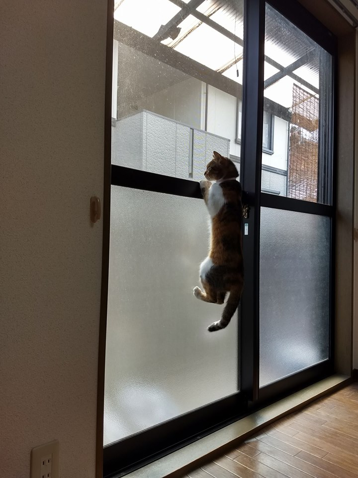 Муся: чудная русская кошка, которая живёт в Японии!