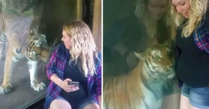 """""""Я знаю, у тебя там малыш!"""" Тигр из зоопарка прижался к животу беременной женщины..."""