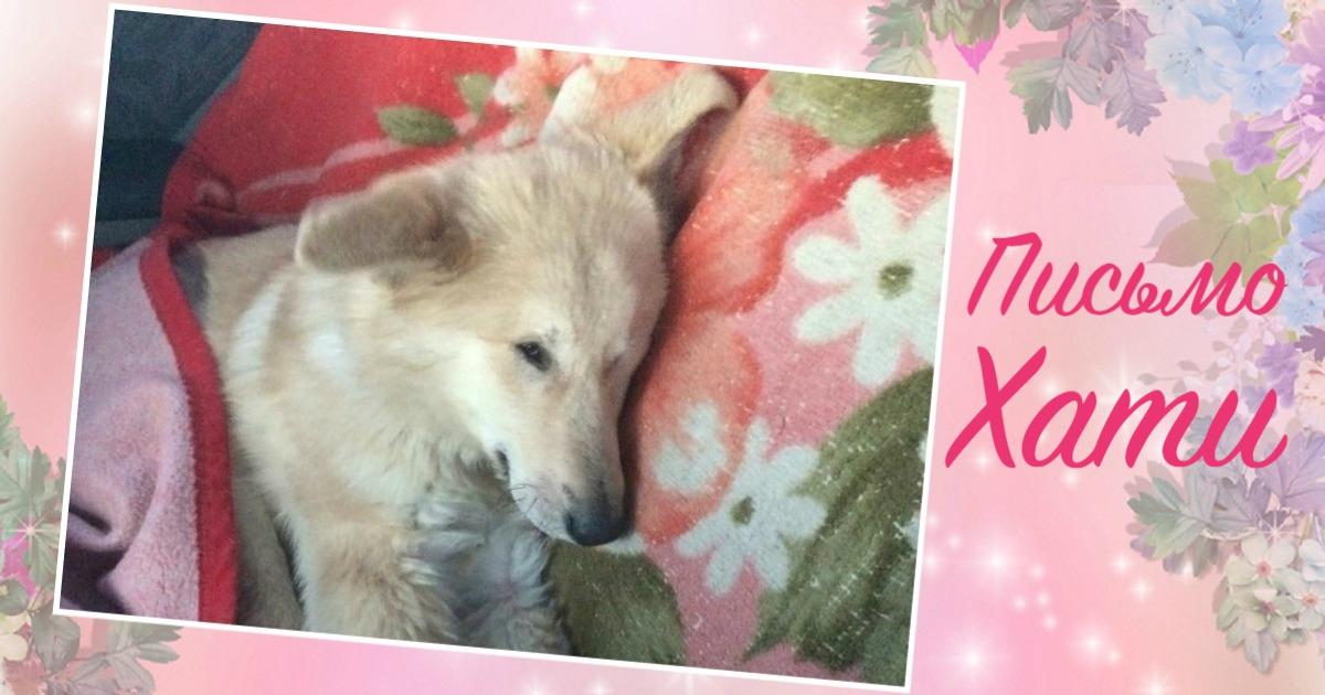 «Мой будущий хозяин, пишет тебе добрый пёс Хати…» Этот трогательный ролик помог слепой собаке найти хозяев! рис 3