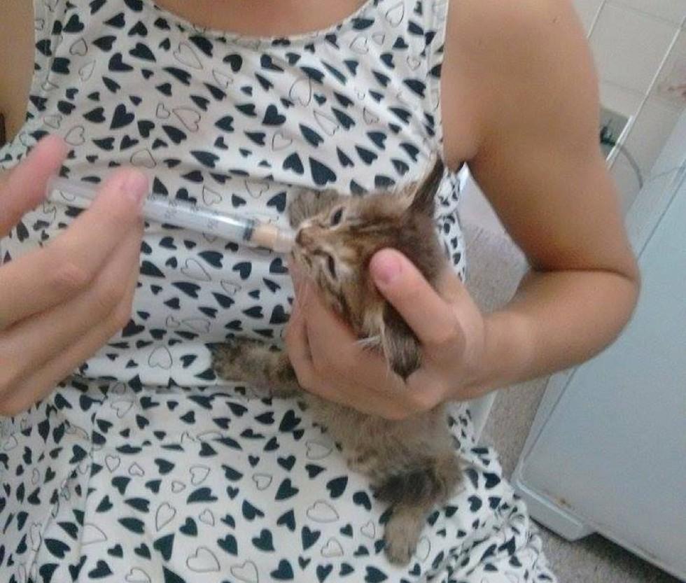 Напуганный, мокрый и очень жалкий - этот котёнок впервые увидел мир... из мусорного пакета! рис 4