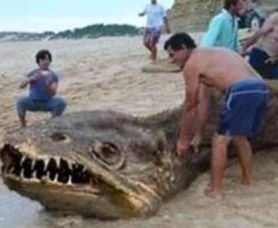 """""""Что же ты такое?!"""" Гуляя с хозяйкой по пляжу, пёс обнаружил у воды необычное существо... рис 2"""