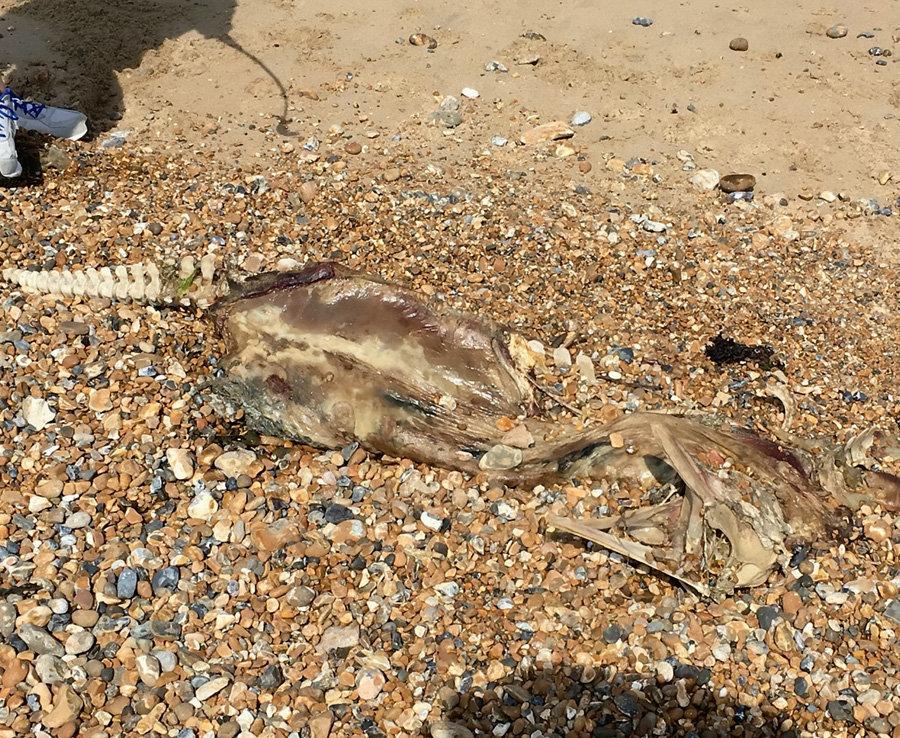 """""""Что же ты такое?!"""" Гуляя с хозяйкой по пляжу, пёс обнаружил у воды необычное существо... рис 3"""