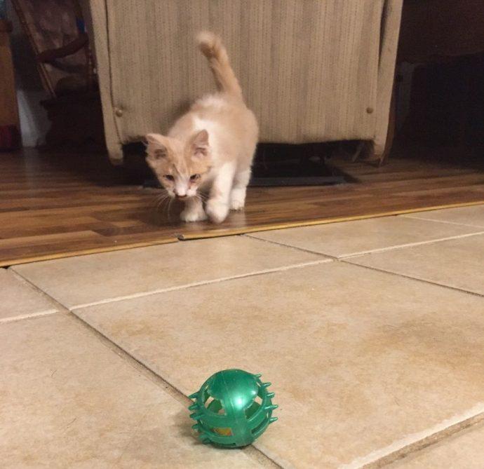 Сломанное лицо не означает сломанную жизнь! Этот котенок перенес страшное, но он выздоравливает :) рис 5