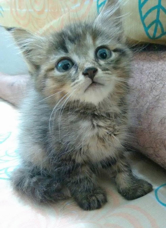 Напуганный, мокрый и очень жалкий - этот котёнок впервые увидел мир... из мусорного пакета! рис 7