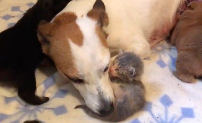 """«Дайте мне маму!» Крошечный розовый """"свёрток"""" знал, чего хочет, поэтому отправился жить... к собакам! рис 5"""