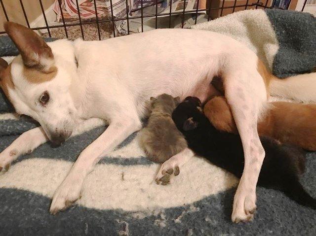 """«Дайте мне маму!» Крошечный розовый """"свёрток"""" знал, чего хочет, поэтому отправился жить... к собакам! рис 2"""