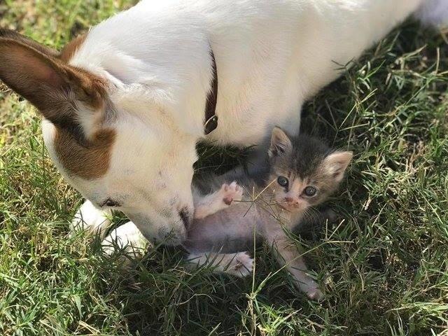 """«Дайте мне маму!» Крошечный розовый """"свёрток"""" знал, чего хочет, поэтому отправился жить... к собакам! рис 6"""