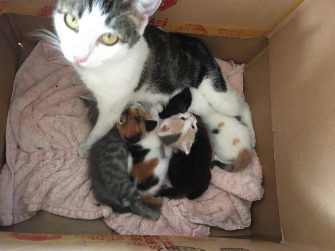 «Это хорошее место, я буду жить здесь...» Деловая кошка пришла в дом не как гостья, а как хозяйка... с молодняком!) рис 4