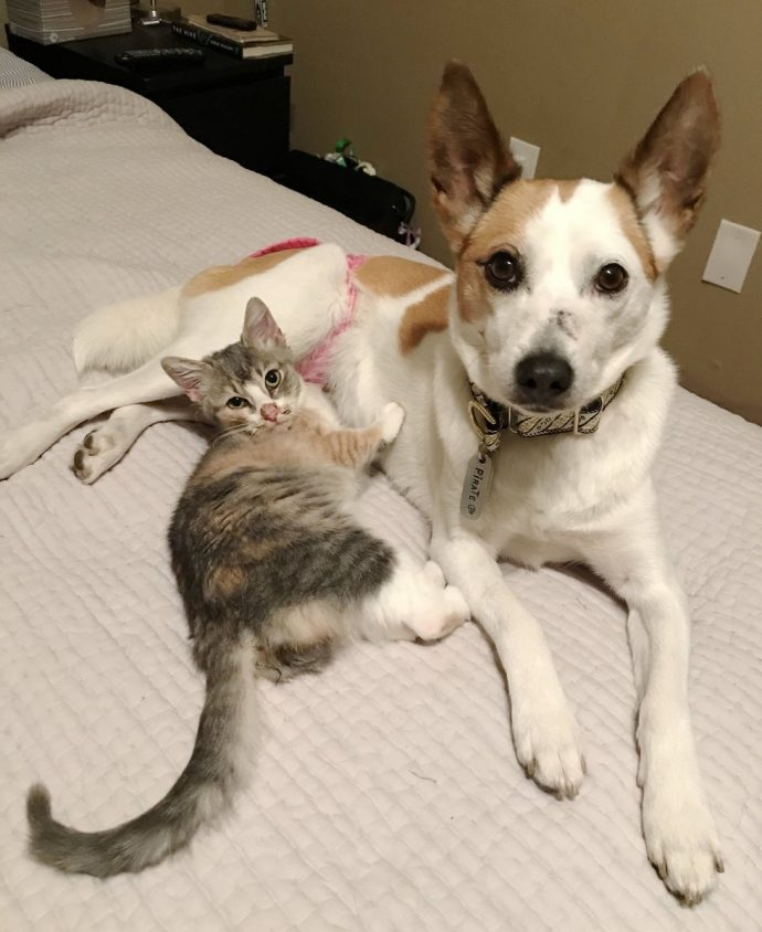"""«Дайте мне маму!» Крошечный розовый """"свёрток"""" знал, чего хочет, поэтому отправился жить... к собакам! рис 8"""