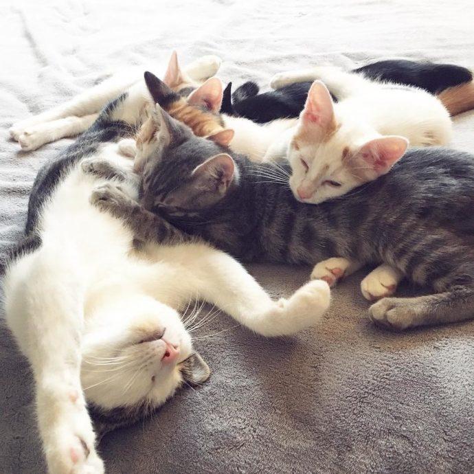 «Это хорошее место, я буду жить здесь...» Деловая кошка пришла в дом не как гостья, а как хозяйка... с молодняком!) рис 7