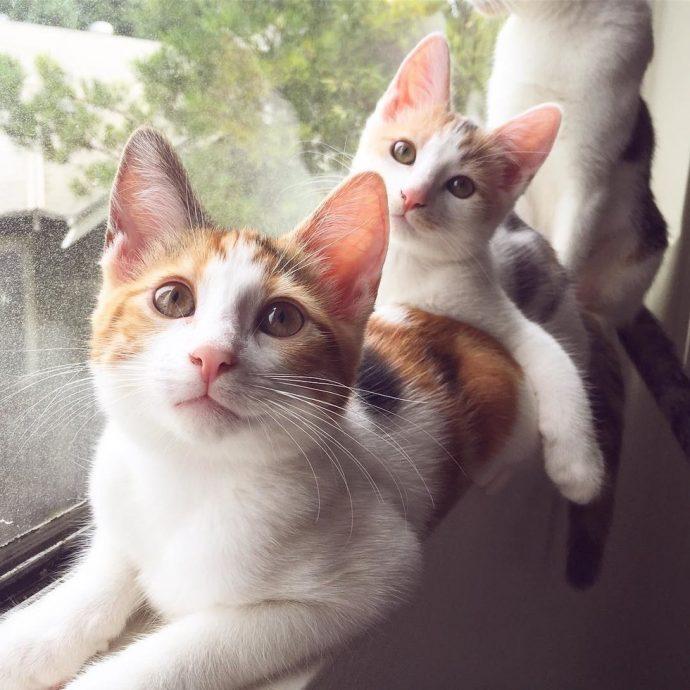 «Это хорошее место, я буду жить здесь...» Деловая кошка пришла в дом не как гостья, а как хозяйка... с молодняком!) рис 10