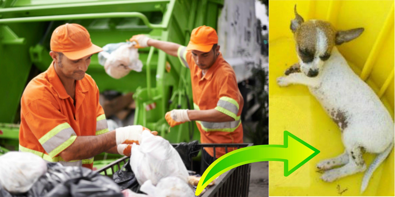 """Рабочий грузил мусор в грузовик, как вдруг услышал вскрик! И вот какой """"подарок"""" он обнаружил в сумке..."""