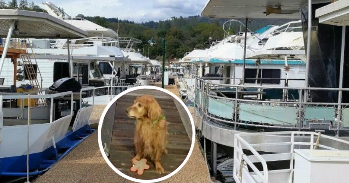 Утро, 6:00, на пристани для яхт - никого... Кроме утопающего в воде старика и... золотистого пса!