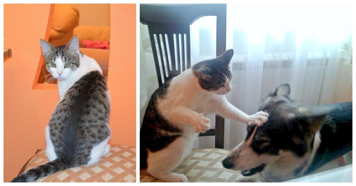 """""""Он знал, кого за ногу обнимать!"""" Кот подстерёг девушку у лифта, втёрся в доверие, а теперь... виснет на шеях её собак! )"""