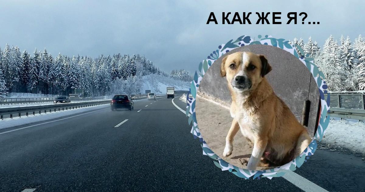 То самое видео: брошенная собака бежит за машиной с бывшей хозяйкой... Но теперь ростовчане узнали правду!