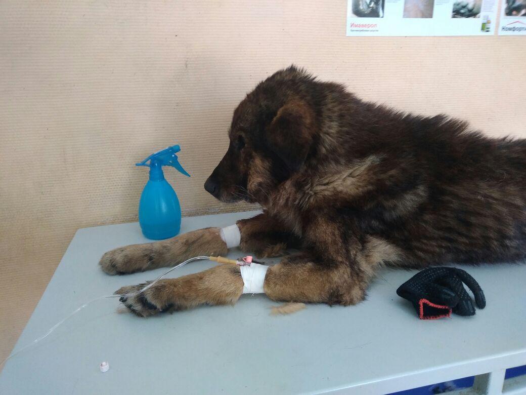 Кто-то выбросил больного пса на речной лёд... Бедолага примёрз, пришлось рыбакам оттаивать его огнём! рис 5