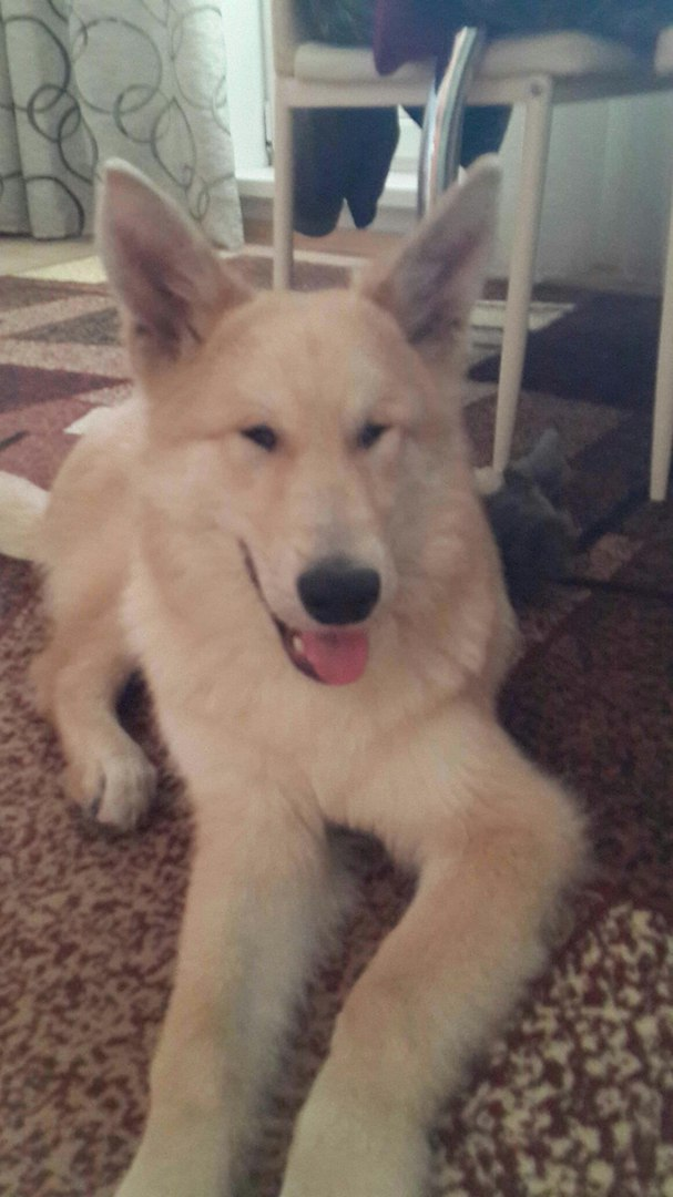 «Мой будущий хозяин, пишет тебе добрый пёс Хати…» Этот трогательный ролик помог слепой собаке найти хозяев!