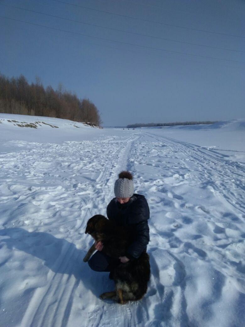 Кто-то выбросил больного пса на речной лёд... Бедолага примёрз, пришлось рыбакам оттаивать его огнём! рис 3