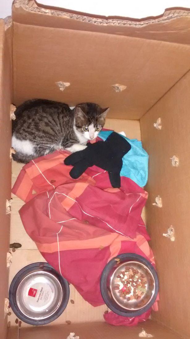 Картонные коробки порой скрывают в себе живых существ! Как бедного кота чуть не приняли за мусор... рис 2
