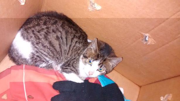 Картонные коробки порой скрывают в себе живых существ! Как бедного кота чуть не приняли за мусор...
