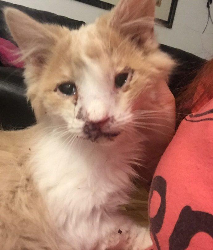 Сломанное лицо не означает сломанную жизнь! Этот котенок перенес страшное, но он выздоравливает :) рис 4