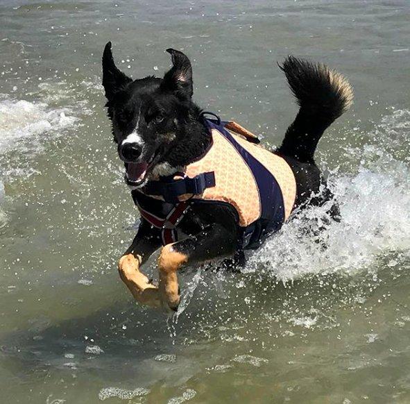 dog-having-fun-in-ocean