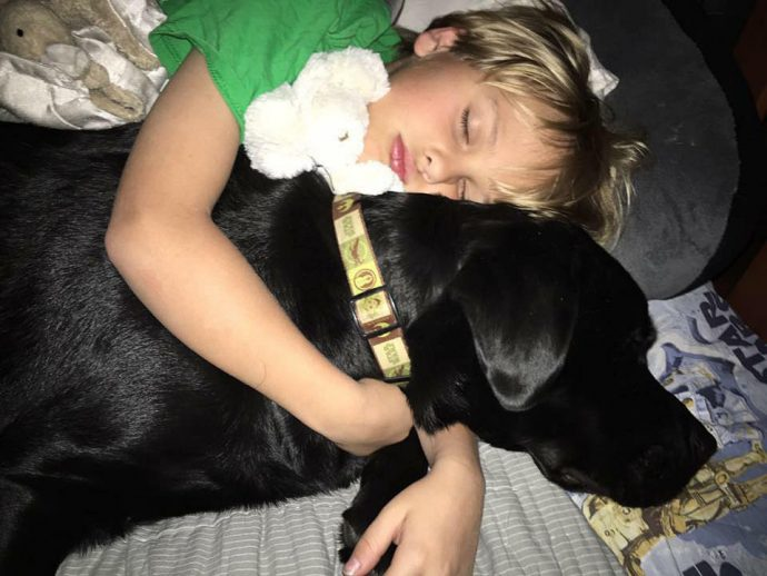 dog-saves-little-boy-middle-of-night-5