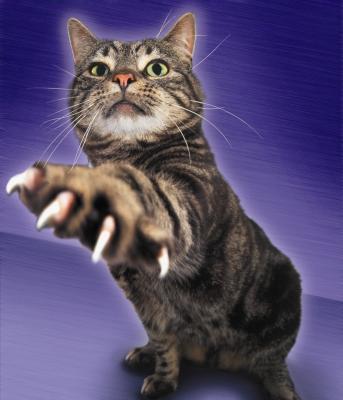 Когтеточка для кошек: какую купить и как приучить к ней питомца?