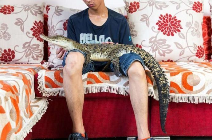 Экзотические жабы, акулы и крокодилы! 15 диких животных, которых китайцы умудрились сделать домашними рис 7