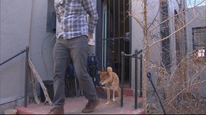 grand-co-dog-rescue-6pkg-transfer_frame_71