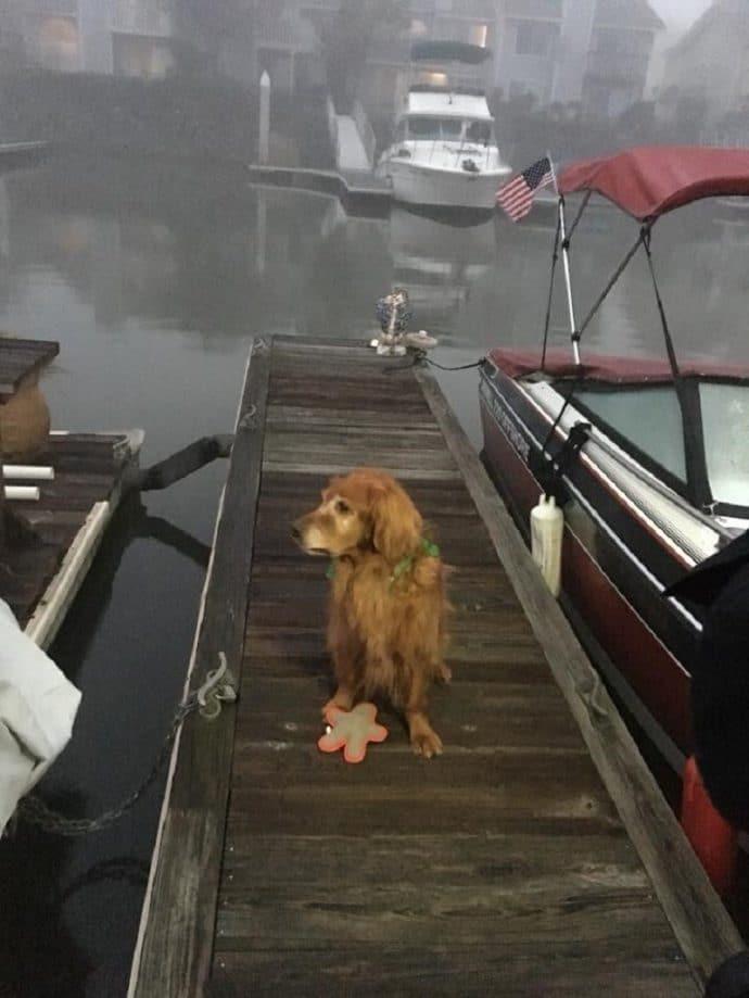 hero-dog-2