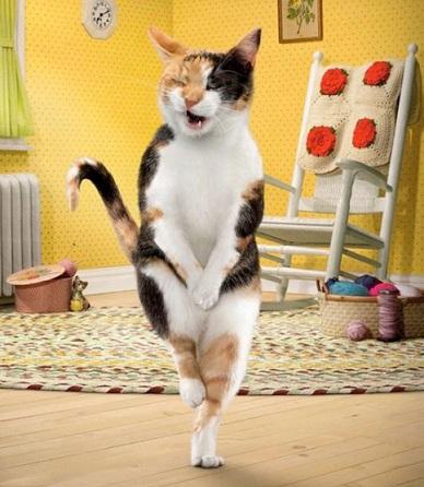 Как приучить к лотку котёнка? Виды и расположение в квартире кошачьего туалета рис 4