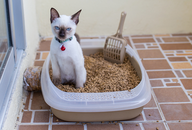 Как приучить к лотку котёнка? Виды и расположение в квартире кошачьего туалета рис 3