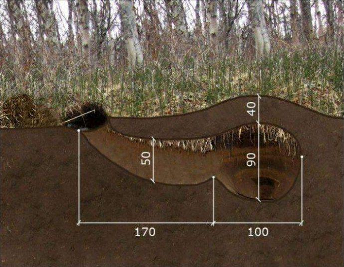 А вы знаете, как выглядит медвежья берлога ИЗНУТРИ? Охотник нашёл лаз и решил проверить... рис 4