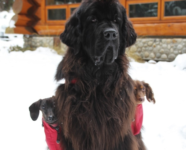 morgan-dog-portrait