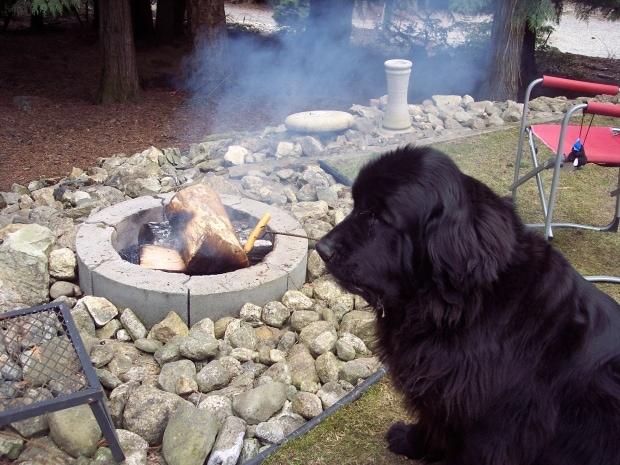morgan-dog-roasts-hot-dog