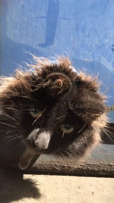 «Сколько ещё мне терпеть?» Бедный кот несколько дней служил пробкой для трубы! рис 2