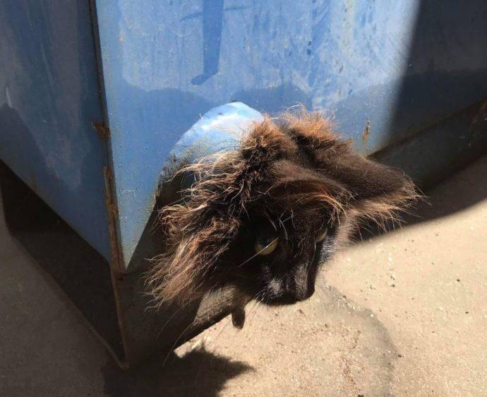 «Сколько ещё мне терпеть?» Бедный кот несколько дней служил пробкой для трубы!