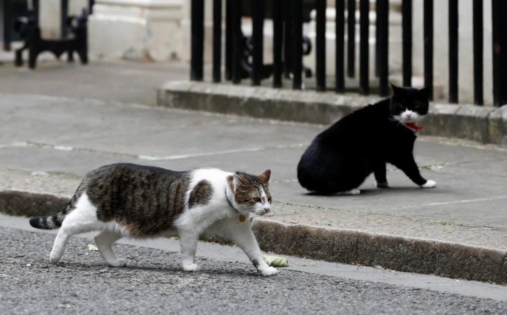 Министерский кот перестал ловить мышей, но отрастил живот... Тайну раскрыло случайное фото! )