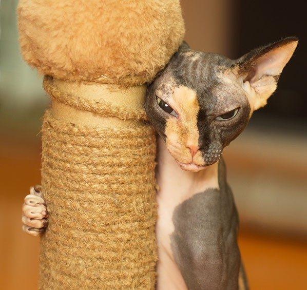 Когтеточка для кошек: какую купить и как приучить к ней питомца? рис 4