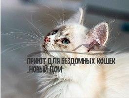 Приют для бездомных кошек