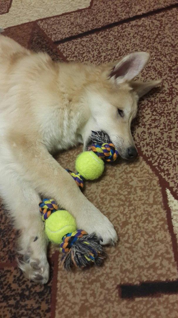 «Мой будущий хозяин, пишет тебе добрый пёс Хати…» Этот трогательный ролик помог слепой собаке найти хозяев! рис 2