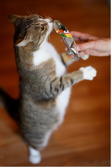 """""""Мадам, где будем делать талию?"""" О Зите, которая решила стать моделью, и её однокашниках - вечно голодных котах с передержки! рис 3"""