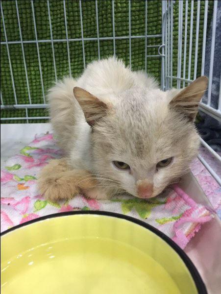 Его едва не замуровали в подвале, и уже на улице бездомному коту стало стало плохо... Помогите Снежку выжить! рис 6