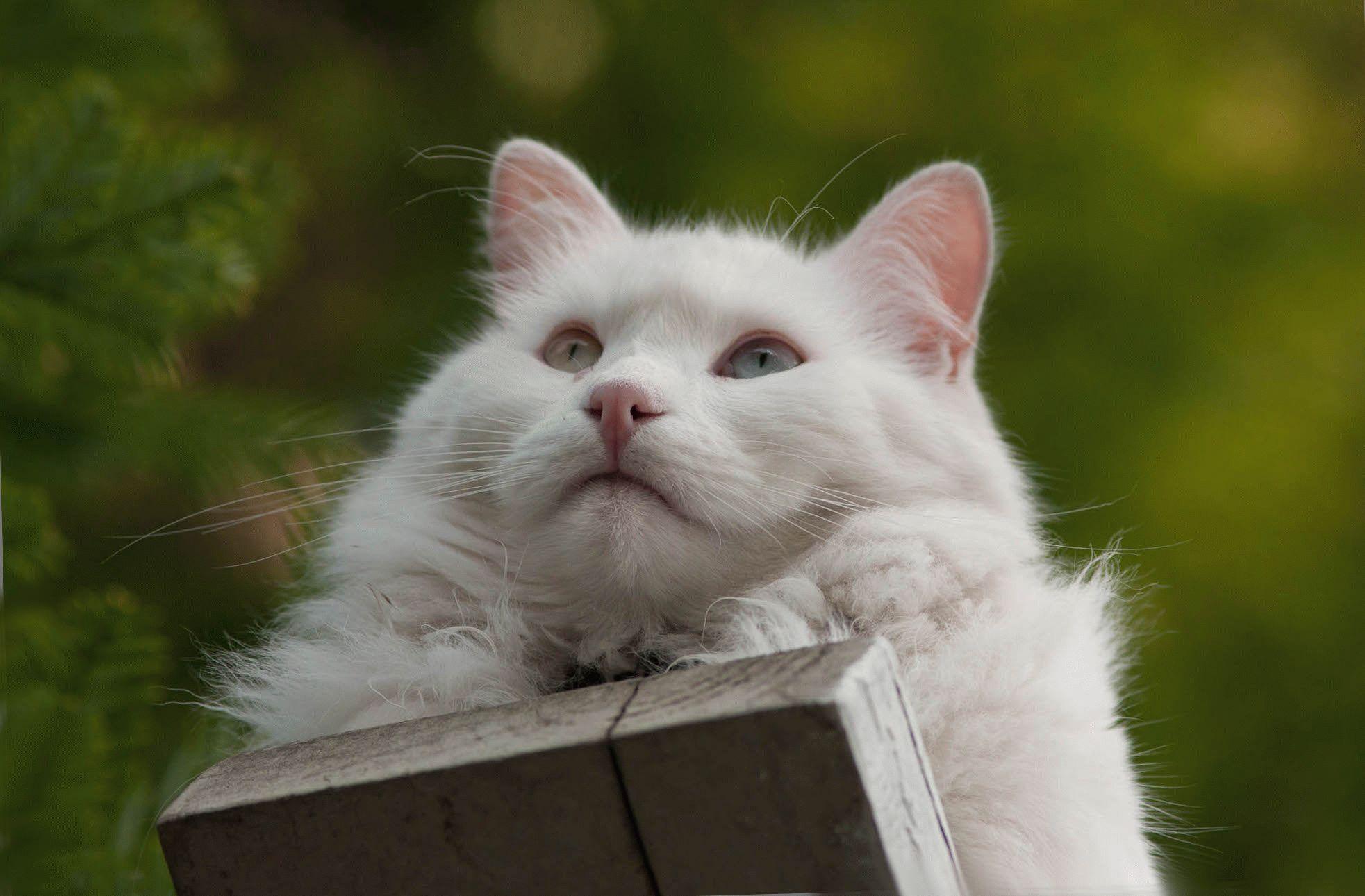Кто нарисовал шубку для кошки Фани?  Пушистая красотка мечтает о ценителе такой картины... рис 3