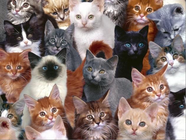 Кто нарисовал шубку для кошки Фани?  Пушистая красотка мечтает о ценителе такой картины...